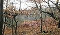 Brown leaves and Bracken - geograph.org.uk - 2221322.jpg