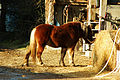 Brucamps cheval de trait 1.jpg