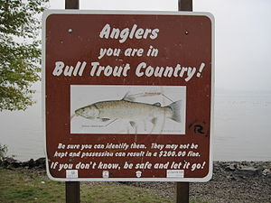 Lake Pend Oreille - Sign for anglers regarding protection of bull trout, Sandpoint, Idaho