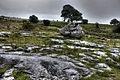Burren (8058375515) (2).jpg