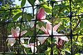 Buscot Park Flower (5644590676).jpg
