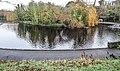 Bushy Park, Dublin -146486 (46427151032).jpg