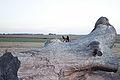Caballos en Localidad rupestre de Chamanga.JPG