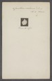 Cancellaria scalarina - - Print - Iconographia Zoologica - Special Collections University of Amsterdam - UBAINV0274 084 05 0006.tif