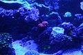 Capetown - Two Oceans Aquarium IMG 9431.JPG