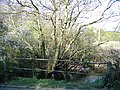 Carden Brook by Stretton Watermill - geograph.org.uk - 406472.jpg