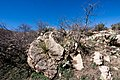 Carlsbad Caverns National Park and White's City, New Mexico, USA - 48344860411.jpg