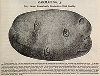 Carman No. 3 - Very Large, Remarkably Productive, High Qualiity.jpg