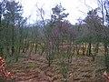Carrs, Slipperfield. - geograph.org.uk - 82650.jpg