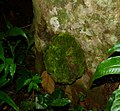Carton arboreal termite.jpg