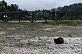 Cat245 is basking on Hot-springs, Furnas, São Miguel Island (38697561891).jpg