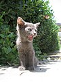 Cat 15.jpg