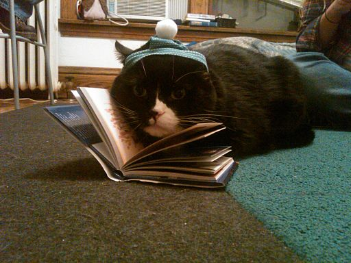 Cat with book 6393055509