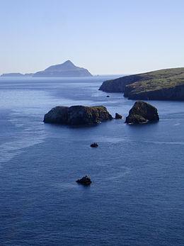 Channel Islands National Park Native Plants
