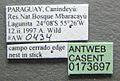 Cephalotes pellans casent0173697 label 1.jpg