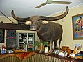 Charlie the Water Buffalo from Crocodile Dundee in October 2003.jpg