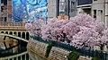 Cherry blossoms beside Hori river near Nayabashi - 2.jpg