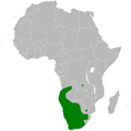 Chersomanes albofasciata distribution map.png