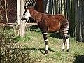 Chester Zoo (8883717726).jpg