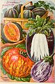 Childs' rare flowers, vegetables and fruits, 1900 - 25th anniversary (1900) (20597288822).jpg
