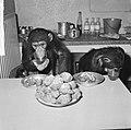 Chimpansees Hilda en Tilly uit Artis, Bestanddeelnr 917-2807.jpg