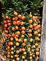 Chinese New Year Tangerine in Yuen Long.jpg