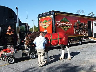 Budweiser - One of the Budweiser Clydesdales