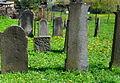 Cmentarz żydowski w Kamiennej Górze(Aw58)SDC11384.JPG