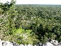 Cobá - Nohoch Mul Pyramide 5 Blick über den Dschungel.jpg