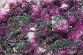 Cobaltaustinite, cobaltoan dolomite 1100.2644.jpg