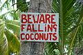 Coconuts (7079020167).jpg