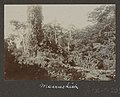Collectie NMvWereldculturen, RV-A102-1-208, 'Moeraskiek'. Foto- G.M. Versteeg, 1903-1904.jpg