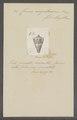 Conus magellanicus - - Print - Iconographia Zoologica - Special Collections University of Amsterdam - UBAINV0274 086 06 0011.tif