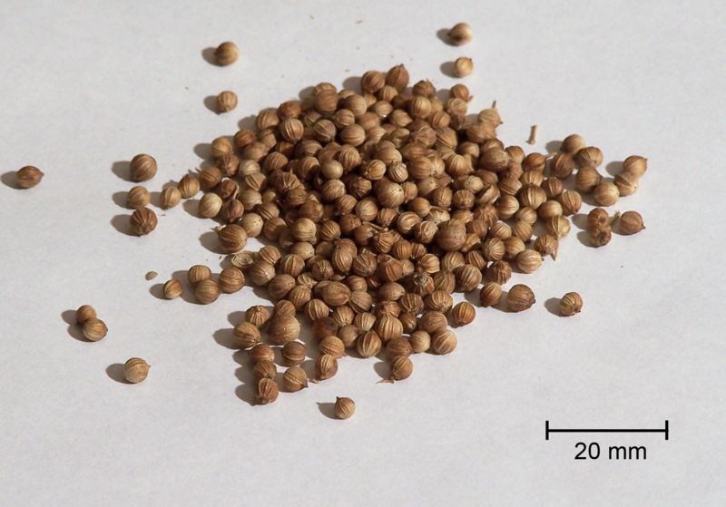 http://upload.wikimedia.org/wikipedia/commons/thumb/e/e3/Coriander.png/800px-Coriander.png