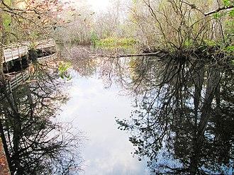 Corkscrew Swamp Sanctuary - One of the park's Lettuce Lakes