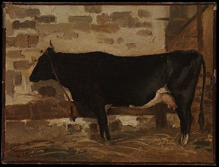 Cow in a Barn