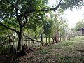 Corral - panoramio (4).jpg