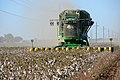 Cotton harvest on the South Plains near Lubbock, Texas. A cotton stripper is pulling the cotton bolls and leaves off the cottons stalk. (24999084452).jpg
