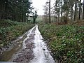 Covert Woods in the rain - geograph.org.uk - 336009.jpg