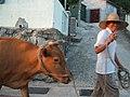 Cow Horn (59133916).jpeg