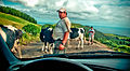 Cow parade (2740168430).jpg