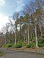 Cragside Country Park - geograph.org.uk - 785419.jpg