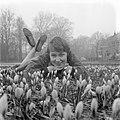 Crocussen bloeien in Overveen, Bestanddeelnr 909-3322.jpg