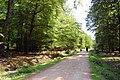 Cycle Path through Brick Kiln Inclosure - geograph.org.uk - 1332703.jpg