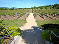 DSC31046, Darioush Winery, Napa Valley, California, USA (4980019493).jpg