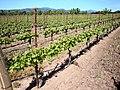 DSC31052, Darioush Winery, Napa Valley, California, USA (5287830099).jpg