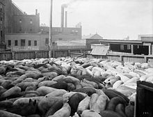 Titre original:  Hog pen at the William Davies Company pork processing facilities in Toronto, circa 1920s. William James Topley - Library and Archives Canada PA-026094 and MIKAN ID number 3424487.