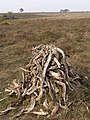 Deadwood stack, Beaulieu Heath, New Forest - geograph.org.uk - 408469.jpg