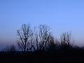 December evening (16019526452).jpg