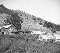 Del štal (hlevov) na Sužidski planini (večinoma so krite s pločevino, dve sta pokriti s slamo) 1951.jpg